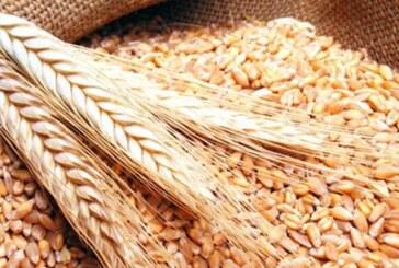 إتحاد المخابز يطالب الدولة بالسماح باستيراد القمح خاماً