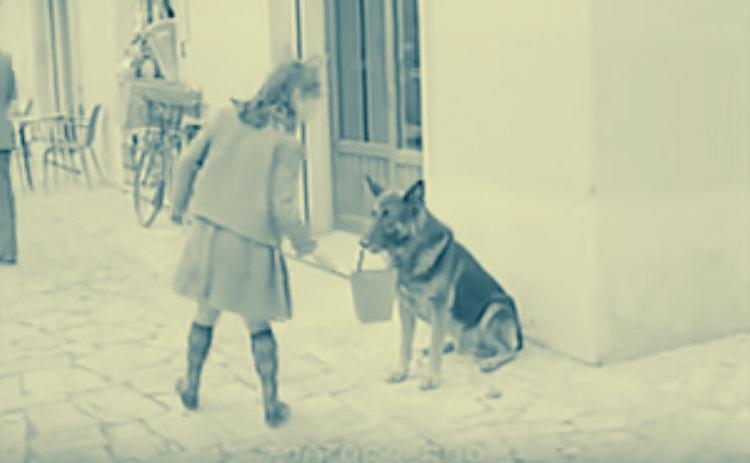 |شاهد بالفيديو| كلب يتسول لشراء اللحمة: يجمع المال ويذهب بها للجزار