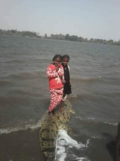 ماهي قصة صورة الطفلتين فوق ظهر تمساح ضخم في قرية شمالي السودان؟