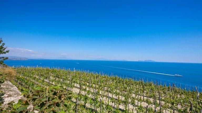 La riscossa dei vitigni rari quasi dimenticati. Una vera gioia per i cultori del vino