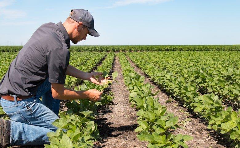 Le Banche e i fondi di investimento tornano a investire nell'agricoltura, soprattutto in quella hi-tech