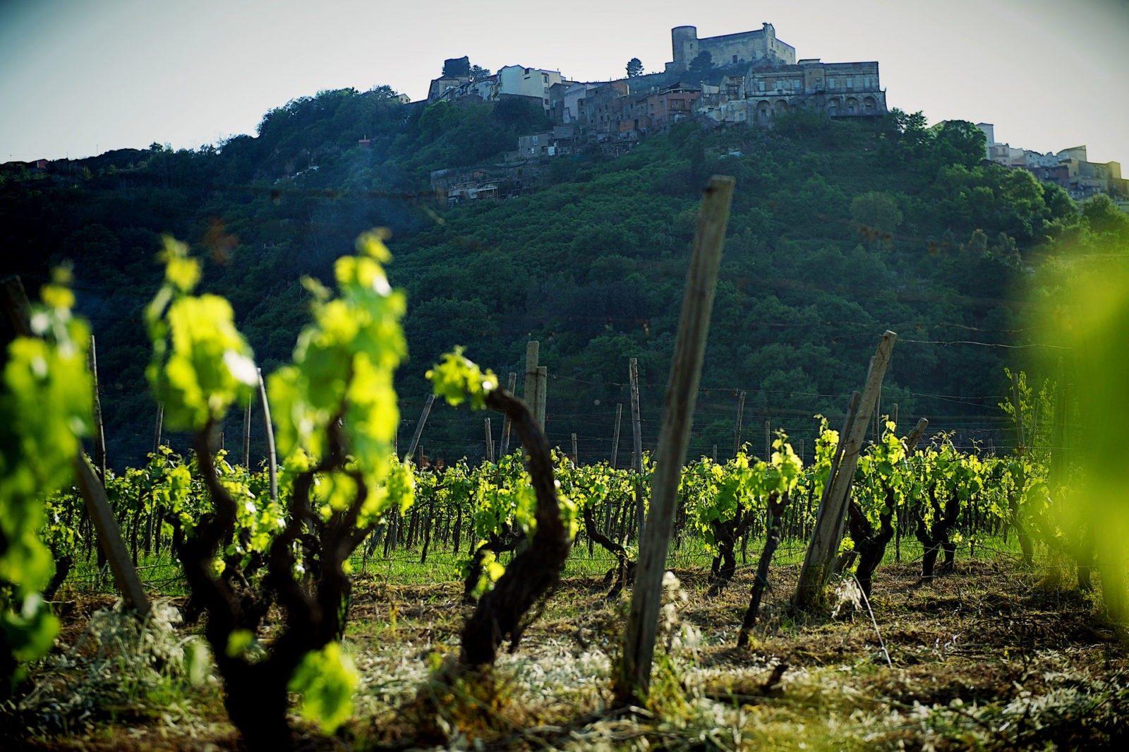 Il Nocera, un vitigno minore e  5 vini da provare