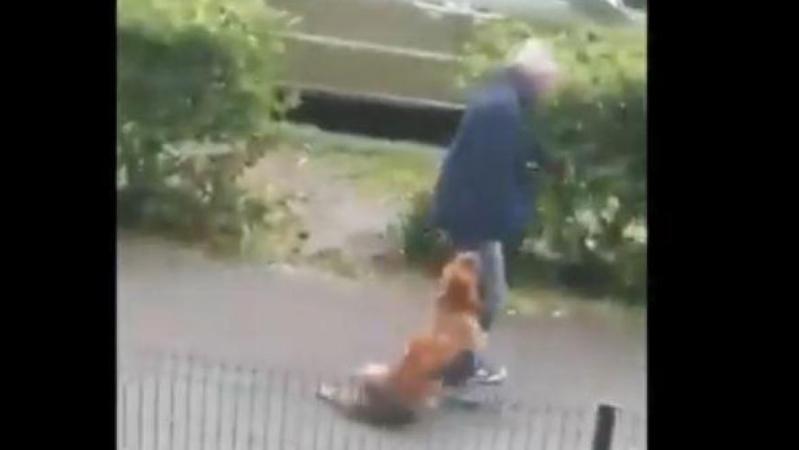 Un homme traîne son chien sur plusieurs mètres en pleine rue: l'animal est tragiquement mort étranglé (vidéo choc)