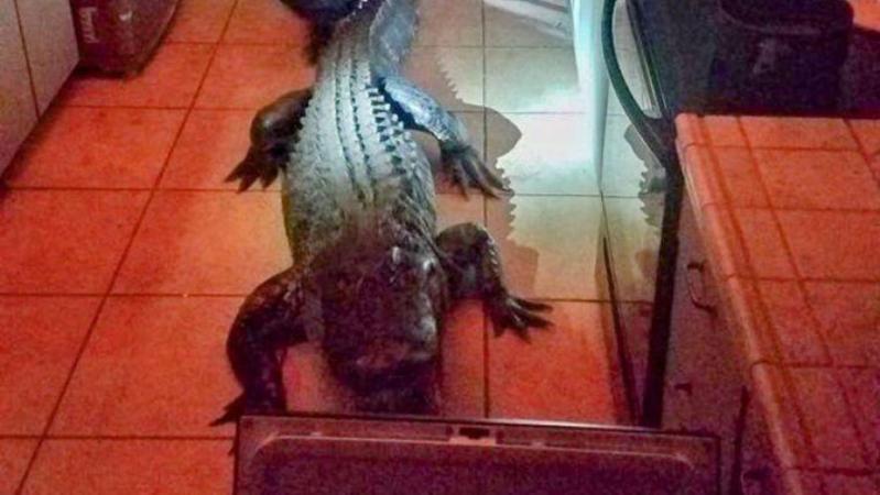 Mary est réveillée en pleine nuit par un bruit dans sa cuisine: elle ne s'attendait pas à se retrouver face à un alligator géant (vidéo)
