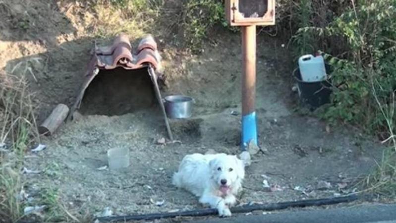 Images déchirantes: 18 mois après la mort de son maître dans un accident, un chien refuse de quitter le lieu de la tragédie (vidéo)