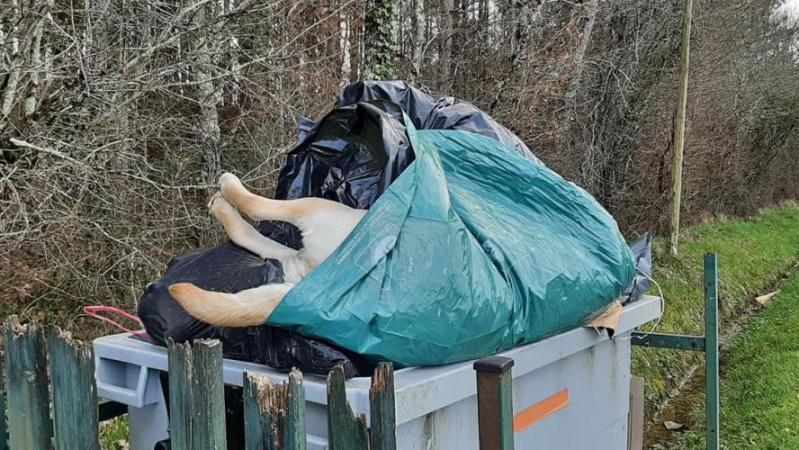 «Je ne comprends pas qu'on puisse se débarrasser de son chien de la sorte»: honteux en France, un labrador retrouvé mort dans une poubelle (photos)