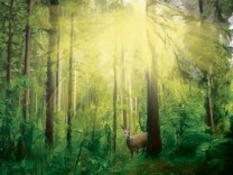 Naturschutz: An die Waffen