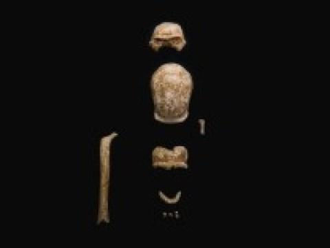 """Anthropologie: """"Neandertaler waren Beute für diese Tiere"""""""