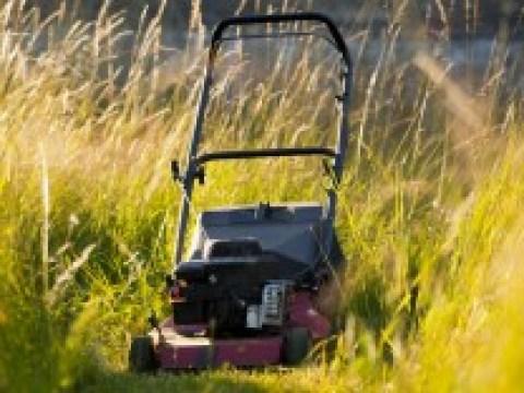 """SZ-Kolumne: """"Theorie und Praxis"""": Ist es eine gute Idee, den Rasen nicht zu mähen?"""