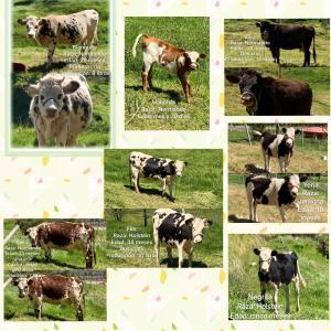 Venta de Lote de ganado-precio negociable