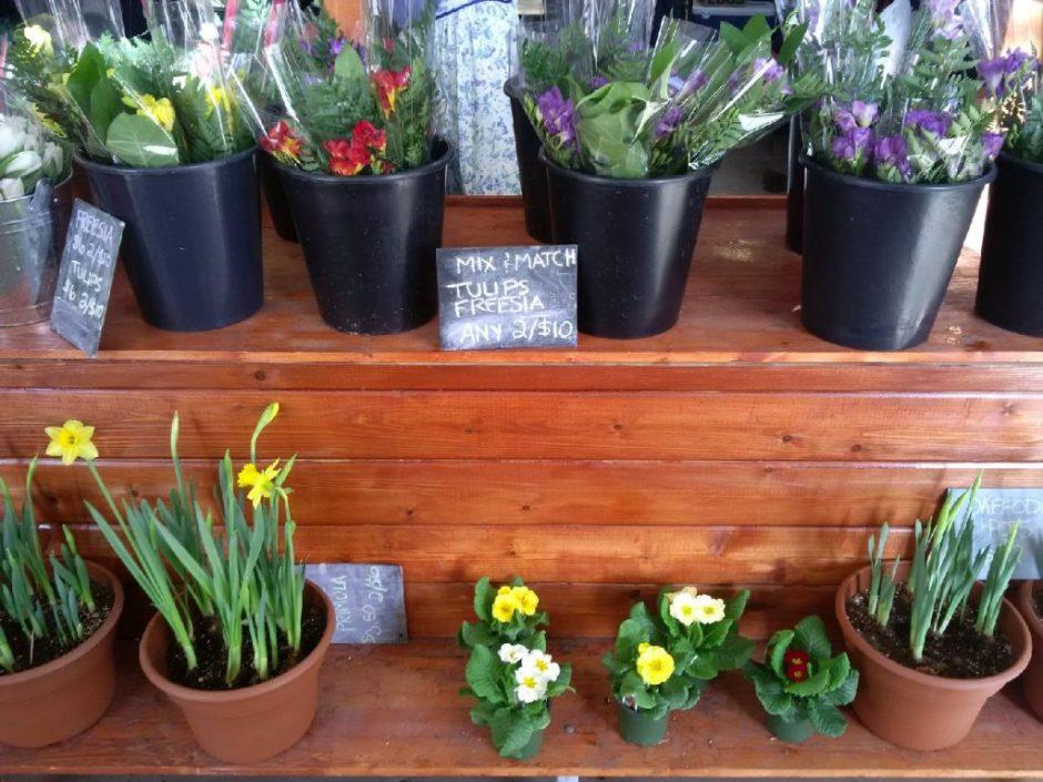 IMG_20150221_113000 stocks flowers