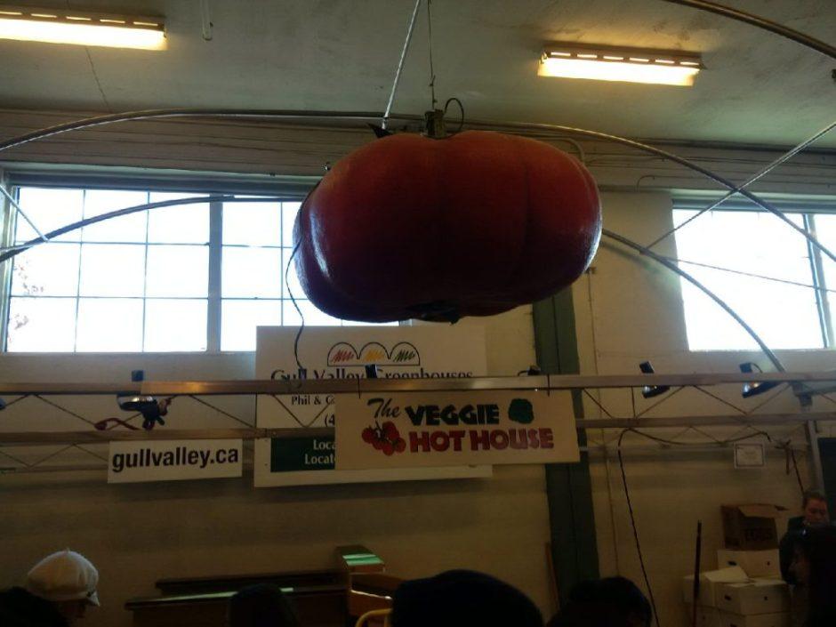 IMG_20150221_114736 big tomato