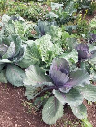 tofino-garden