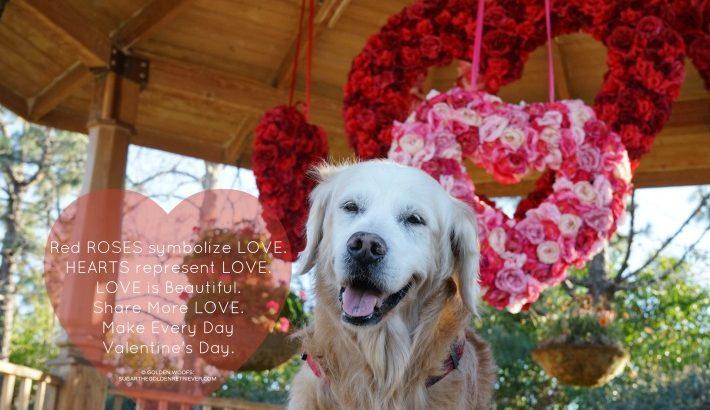 Sugar The Golden Retriever Lifestyle Dog Blog Dog