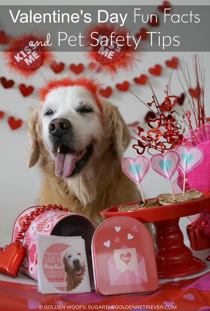 Valentines Day Fun Facts And Pet Safety Tips Golden Woofs