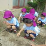 畑には枝豆を植えました。