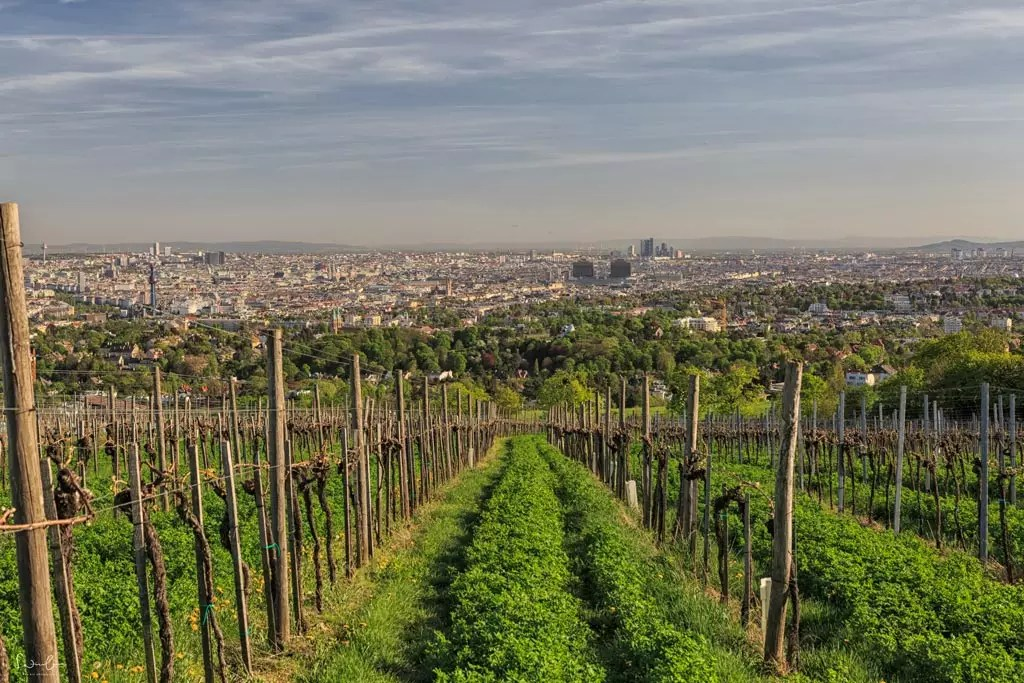 Vienna summer locations vineyards