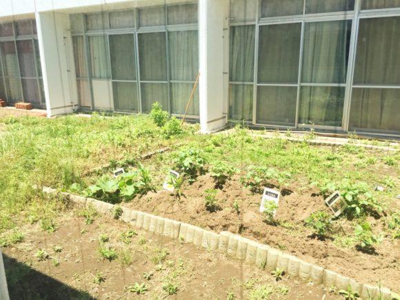 中庭の菜園