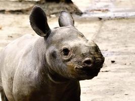 Se zahájením jarní mezisezony oslaví v ZOO Dvůr Králové Velikonoce, zpřístupní Lví safari a pojmenují mládě nosorožce. Foto (c) Jan Žďárek