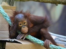 ZOO Dvůr Králové: Bez palmového oleje už i v krmivech pro zvířata. Foto (c) Simona Jiřičková