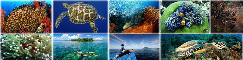 Bunaken Diving Tour
