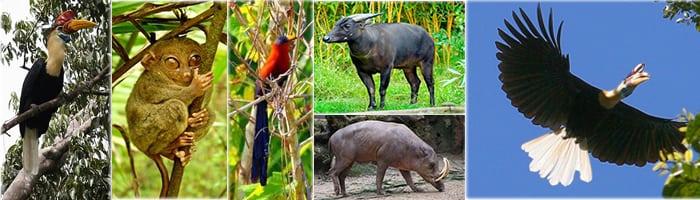 Lore Lindu Animals
