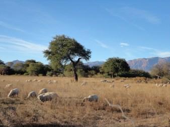 Rural landscapes near Cafayate in Salta, Argentina