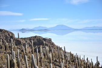 Dazzeling landscape from Cacti island in the Uyuni Salt Flat, Bolivia