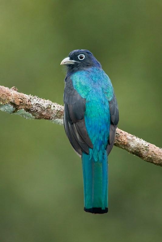 Bird-watchinh in the Amazon Yasuni Reserve, Ecuador tour