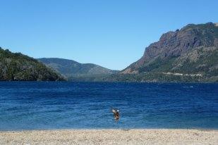 Lakes, mountains and wildlife near Bariloche, Patagonia Argentina