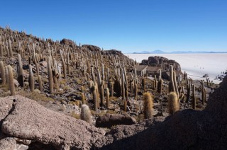 Cacti desert in the Huasco Island, Uyuni Salt Flat, Bolivia