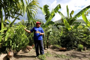 As well as coffee plantations, there are a huge variety of organic fruits growing in this region, like these tall banana plants you can see in the background