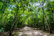 The jungle road to the archaeological site of Coba, Mexico