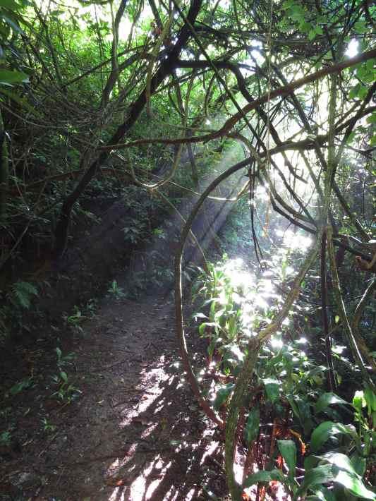 Walking along the trails of the Xandari Resort and Spa, Costa Rica