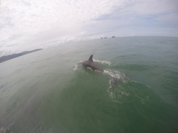 A dolphin gets up close to greet nearby travelers.