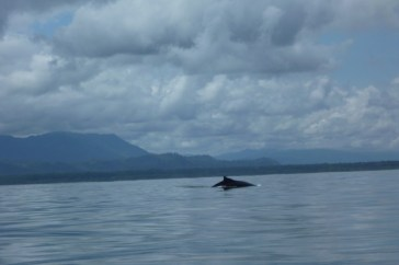 A gorgeous whale swimming near the boat in Marino Ballena National Park