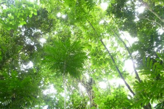 Trekking in Playa Hermosa nature reserve in Costa Rica