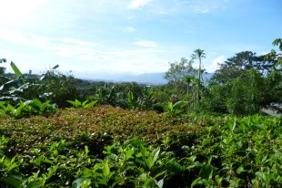 View over the Central Valley of Costa Rica from Finca Rosa Blanca