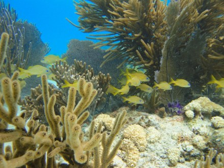 Belize's beaches and cayes are the perfect place to get away, and surrounded by coral reefs