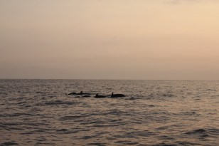 During a dolphin and whale watching tour in El Paredon beach, Guatemala, we took part in the data collection and monitoring carried out by ABIMA