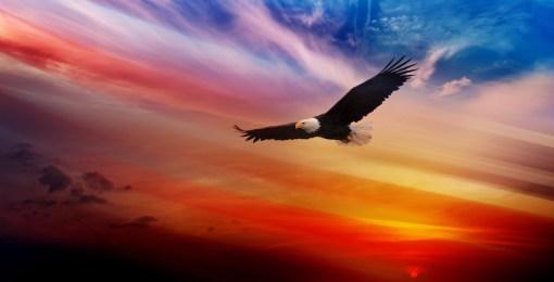 Eagle Soars