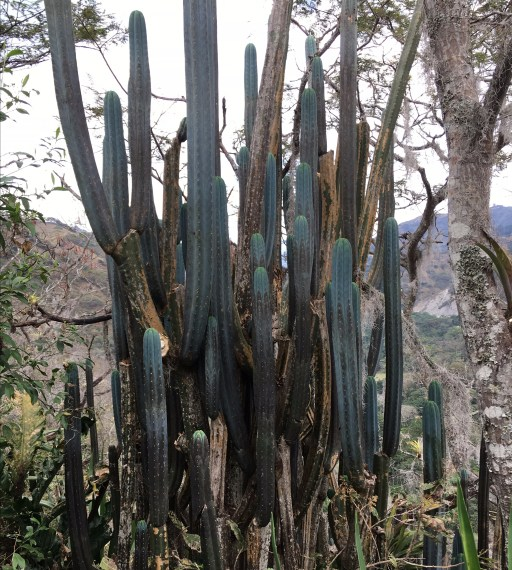 San Pedro In The Valley
