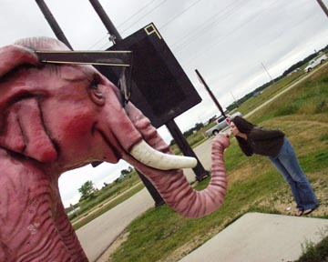 Pink Elephant, DeForest, WI