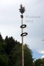 maibaum_2011.jpg