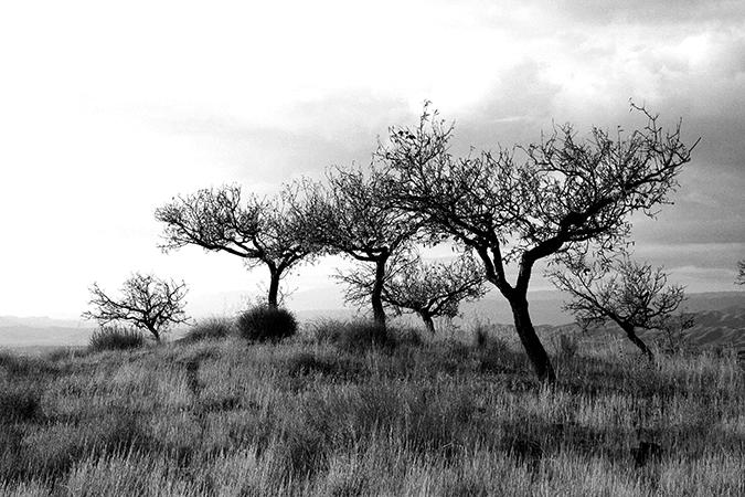 Trees-black-white-stock