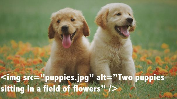 Puppies depicting how to use alt text