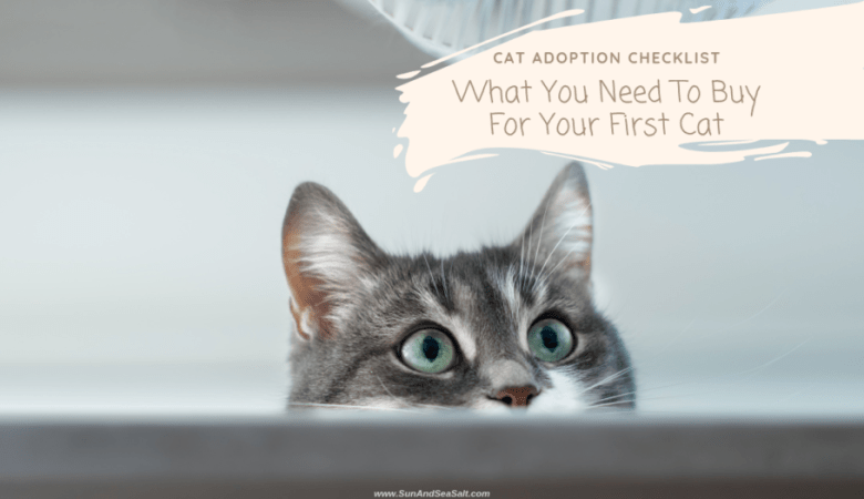 What you need to adopt your first cat