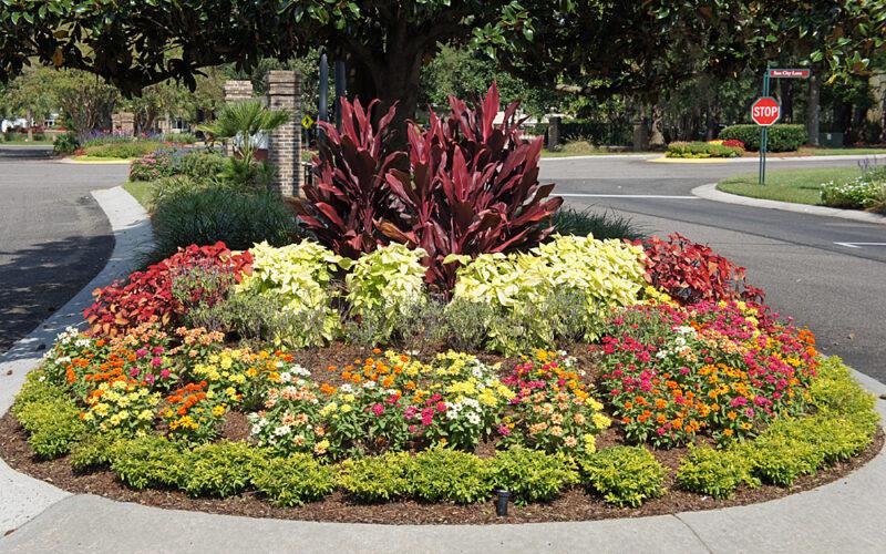 Road Island Flowers