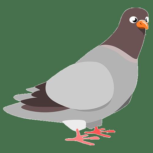 pigeon-google-update