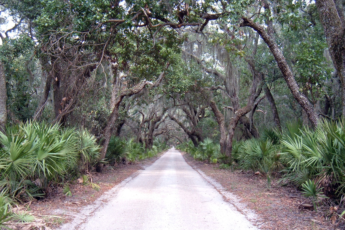 Cumberland Island: A Hidden Gem in Georgia